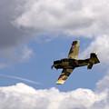 Flying High by Angel Ciesniarska