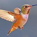 Flying Jewel by Edita De Lima