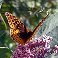 Flying Jewel by Scott Heister