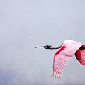 Flying Pretty - Roseate Spoonbill by Debra Martz