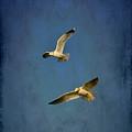 Flying Seagulls by Anki Hoglund