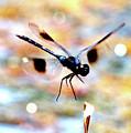 Flying Sparkler by Carol Groenen
