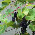 Flying Wine by Dan Friend
