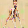 Foal Cute Fellow by Go Van Kampen