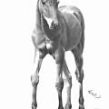 Foal by Ed Teasdale