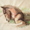 Foal by Jamey Balester