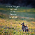 Focus On Your Goal by Bill Wakeley