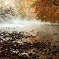 Fog And Color by Amanda Kiplinger