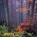 Fog And Forest Colours by Elena Elisseeva