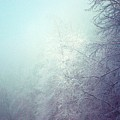 Fog And Ice by Mattie Bryant
