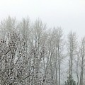 Fog And Light Snow by Will Borden
