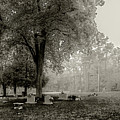 Fog In Cemetery 2383gt_s2 by Doug Berry