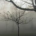 Fog In Shenandoah by Shannon Louder