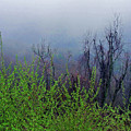 Fog In The Mountains by Susan Lunsford