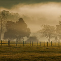 Fog In The Park by Mitch Spence