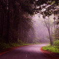 Fog In The Redwoods by Mountain Dreams