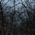 Fog In The Trees by Angel Jesus De la Fuente