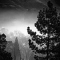Fog In The Trees by Laura Macky