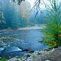Fog In The Wenatchee Forest by Idaho Scenic Images Linda Lantzy