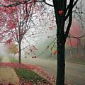 Fog On A November Morning by Karen Majkrzak