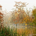 Fog On The Bayou by Bill Perry