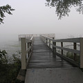 Fog On The Dock by Janis Beauchamp
