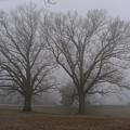 Fog On The Yorktown Battlefield by Liza Eckardt