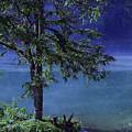 Fog Over The Pond by Susanne Van Hulst
