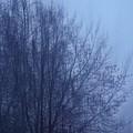 Fog by Photos By Zulma