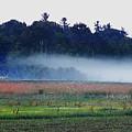 Fog Rolls In by Expressionistart studio Priscilla Batzell