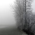 Fog by Sharon Talson