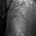 Fog Shrouded Lane B W  7861 Bw_2 by Steven Ward