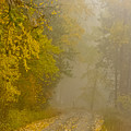 Foggy Autumn Morn by Albert Seger