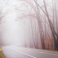 Foggy Autumn by Rima Biswas