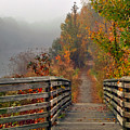 Foggy Fall Trail by Jerry Gammon
