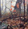 Foggy Fall Woodland Morning by Thomas R Fletcher