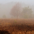 Foggy Field by Scott Hovind