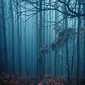 Foggy Forest by Carlos Caetano