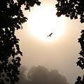 Foggy Heron Flight by Joshua Bales