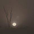 Foggy July Sunrise by Rrrose Pix