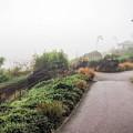 Foggy Langmoor Gardens - Lyme Regis by Susie Peek