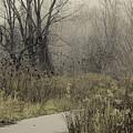 Foggy Late Fall Morning by Nikki Vig