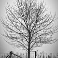 Foggy Lone Tree Hill Fine Art by Mike Koenig