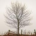 Foggy Lone Tree Hill by Mike Koenig