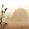 Foggy Meadow 2 by Scott Hovind