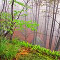 Foggy Misty Spring Morning by Thomas R Fletcher
