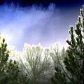 Foggy Moonlit Night by Will Borden