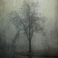 Foggy Morn by Mattie Bryant