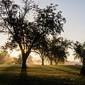 Foggy Morning 2 by Andrea Anderegg