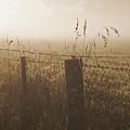 Foggy Morning At A Farm by Hideaki Sakurai
